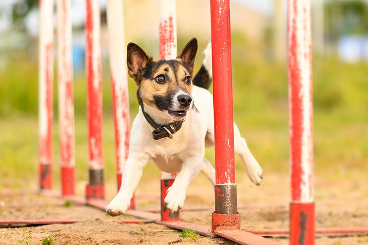 Koiran Piilokives