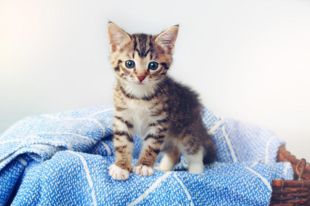 Kissan pennun-luovutusikä