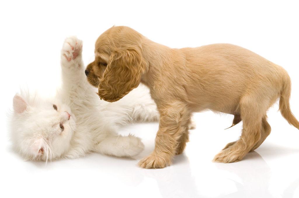 Koiran ja kissan pennut