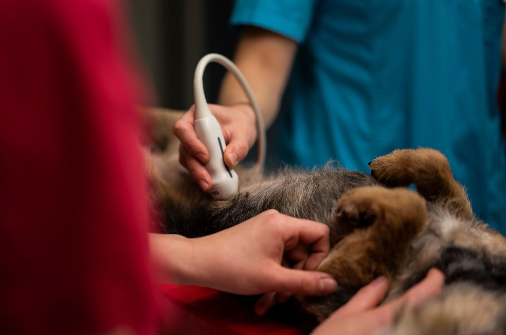 ultraäänitutkimus