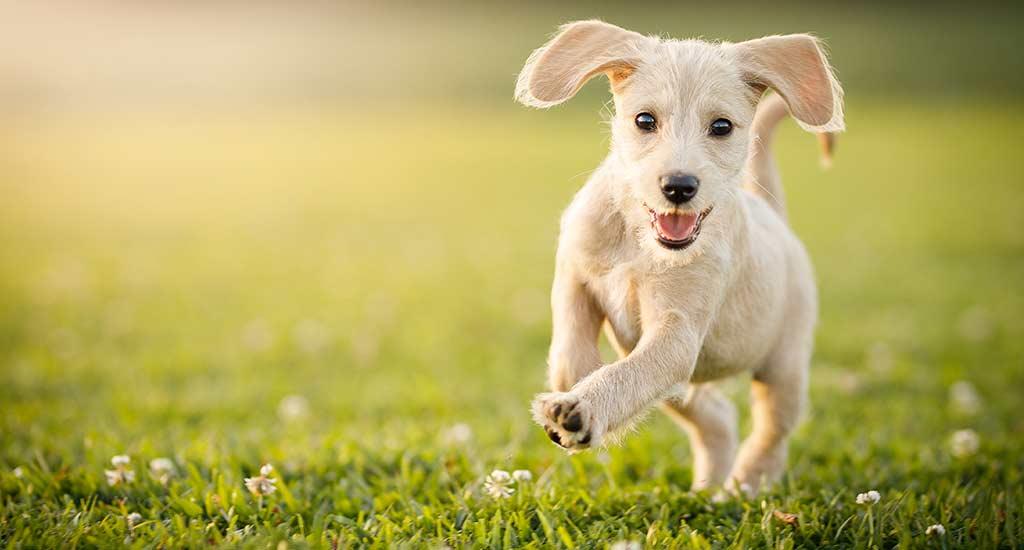 Koira Suolitukos