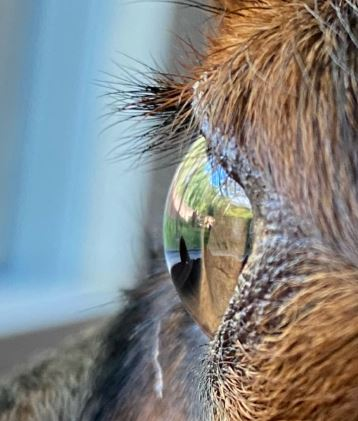 Silmän sarveiskalvo