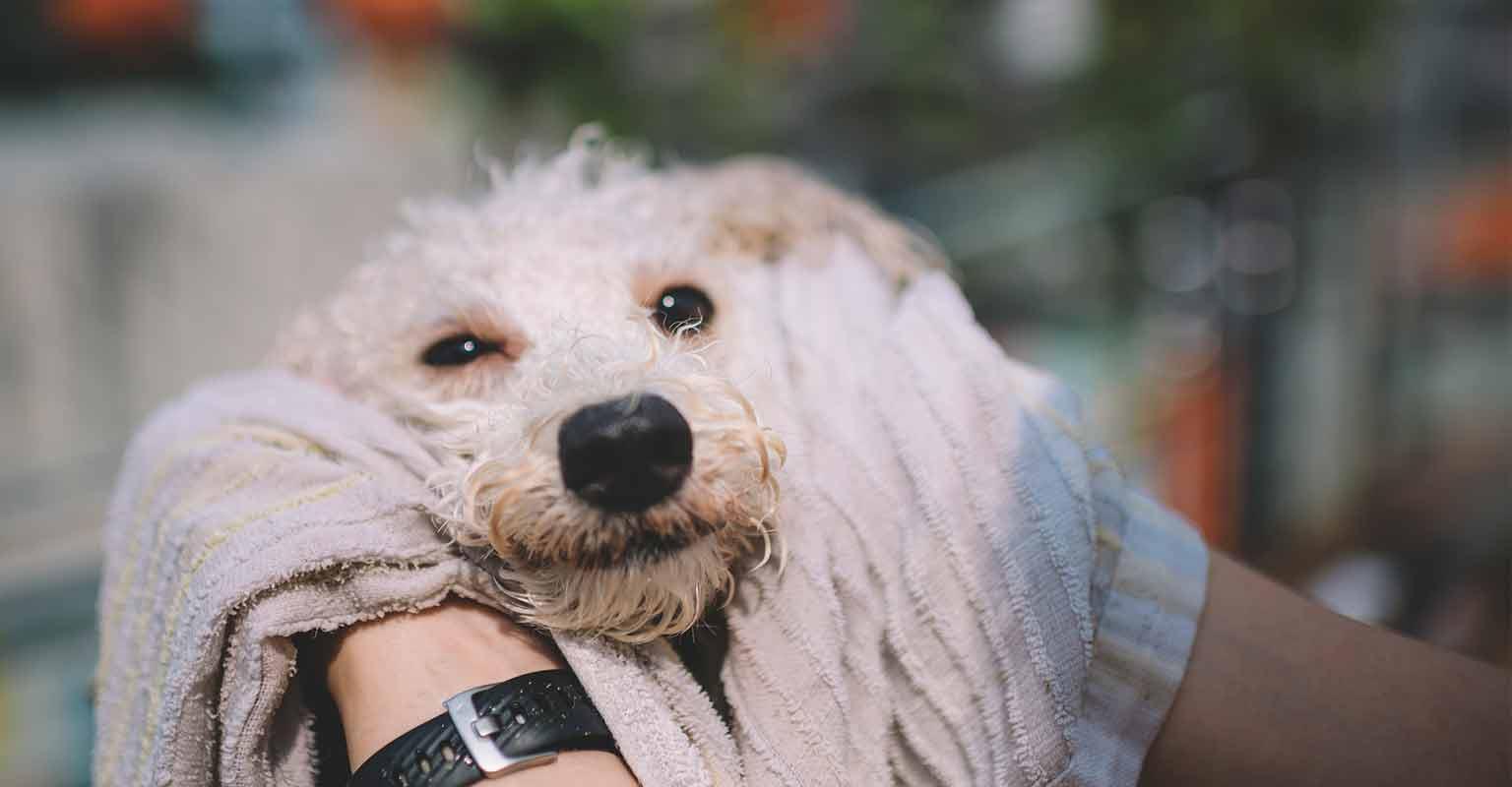 koiran trimmaus