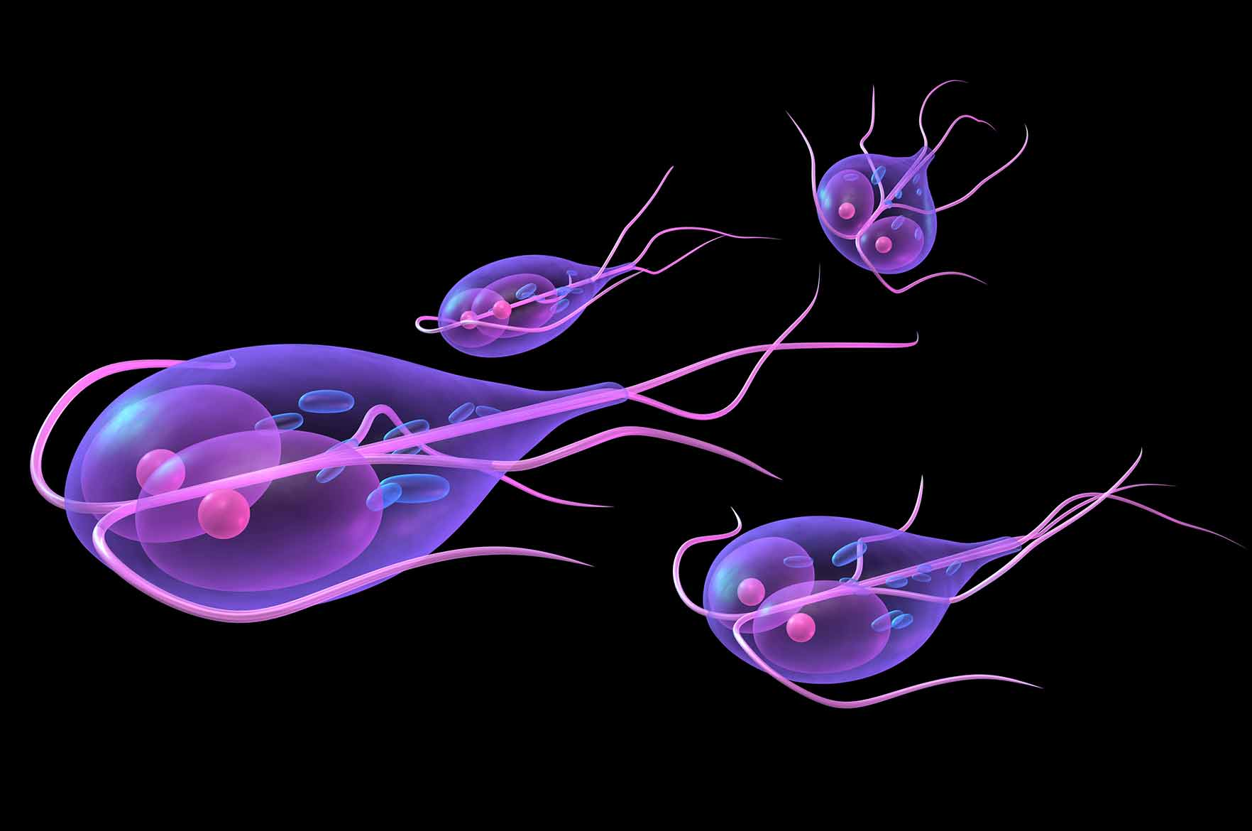 Giardiasis oireet, Giardia gyermekei