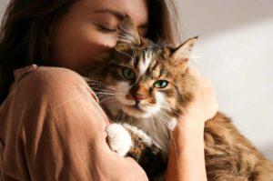 kissan kilpirauhasen liikatoiminta