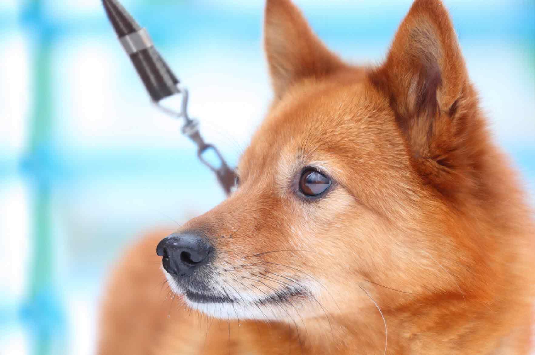 Koiran Napa