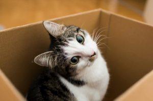 Kissa istuu pahvilaatikossa