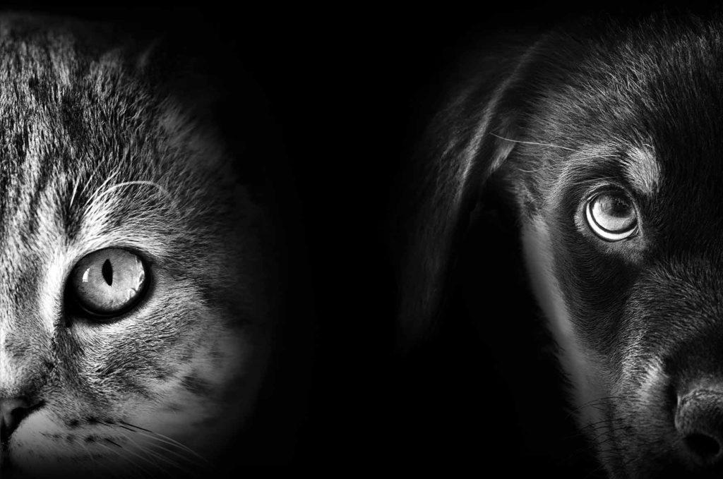 Koiran ja kissan silmät
