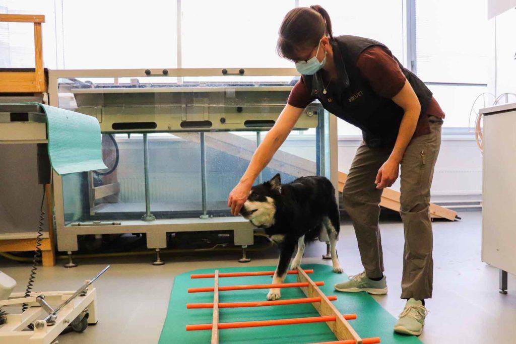 Koiran fysioterapia tikkailla