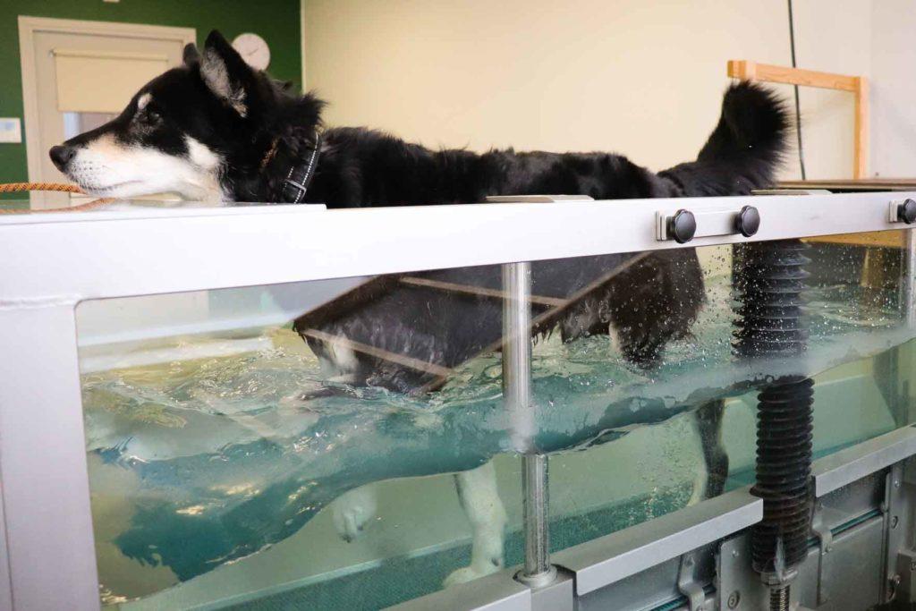 Koiran fysioterapia vesiallas