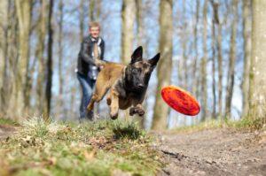 Koiran liikunta