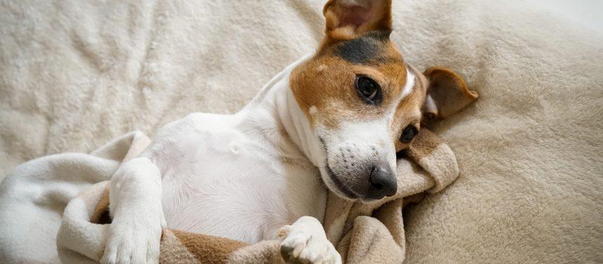 Koira oksentaa ja ripuloi