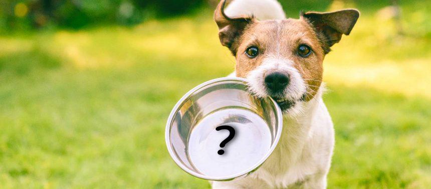 Koiran ruoka-aineallergia