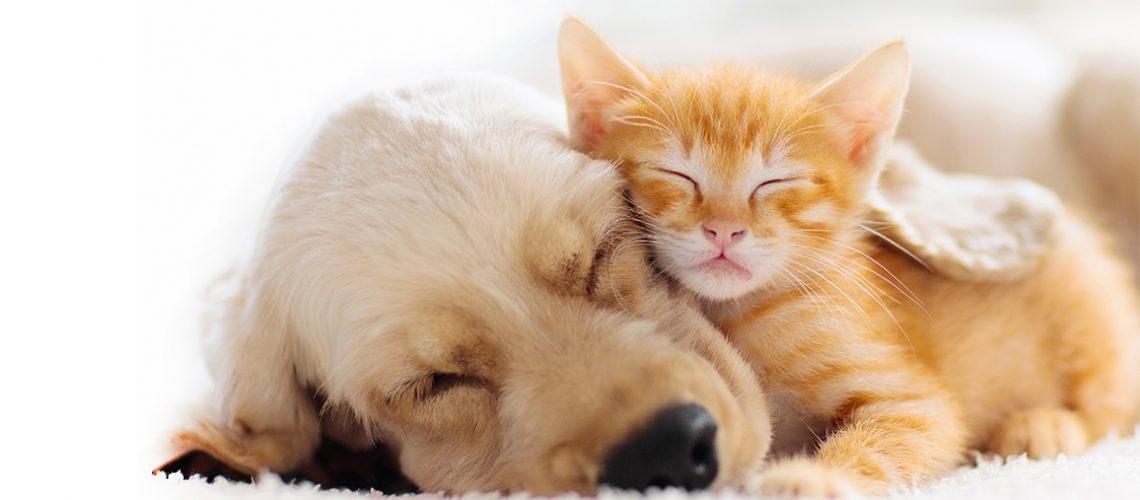 Koiran tiineys ja synnytys