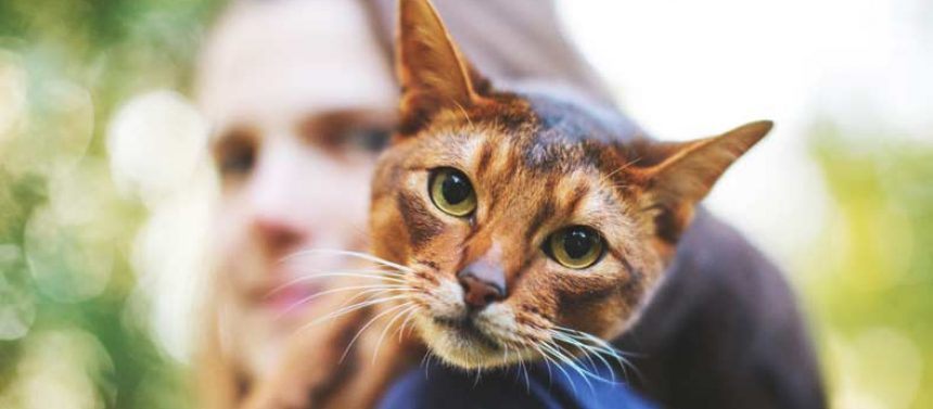 Kissa on taitava piilottamaan kipua, joten usein kissan muuttuneen käytöksen kuvitellaan johtuvan vanhuudesta.