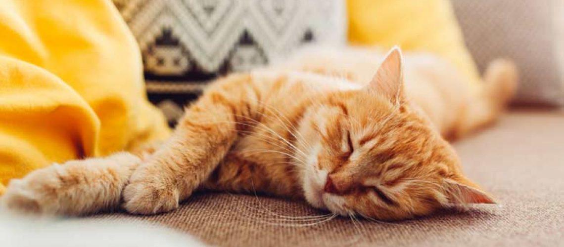 kissa sohvalla