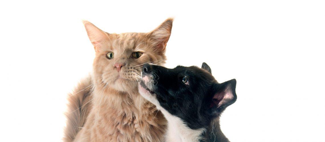 kissan ja koiran rokotukset